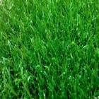 Искусственная трава Ideal ERBA